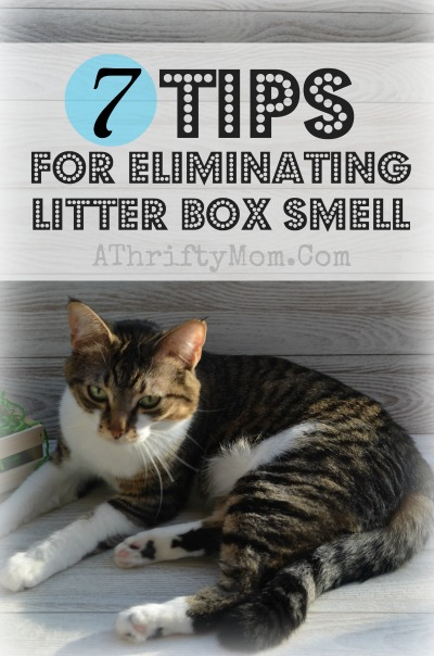 Tips eliminating litter box smell, 7 ways to cut cat box odor #Cat, #cats, #PetTips, #LitterBox, #Pets