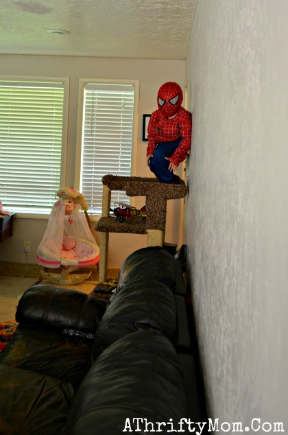 spiderman on the cat stand