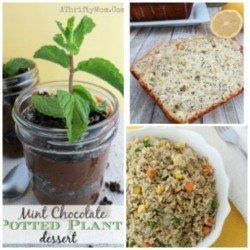 Edible potted plant, lemon poppy seed bread and fried rice